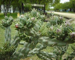 Cactus Country RV Park - San Antonio, TX - RV Parks