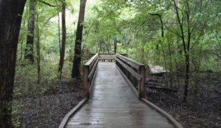 Yellow River Marsh Preserve State Park - Santa Rosa County, FL - Florida State Parks